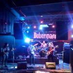 dobermann bar